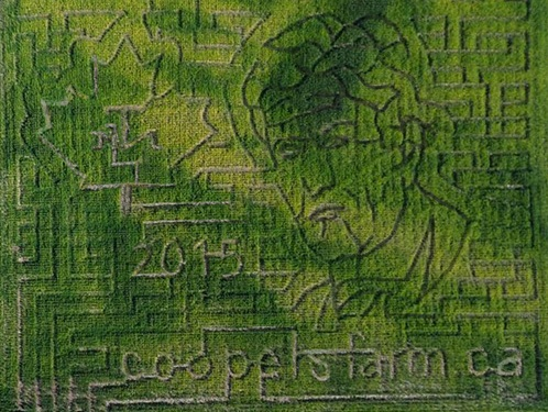 Join Us For A Corn Maze Chase