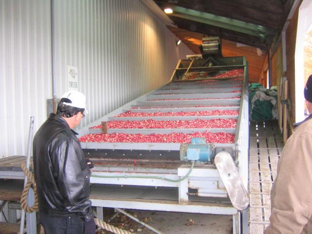 2003 Bala Cranberry Oct 4 03