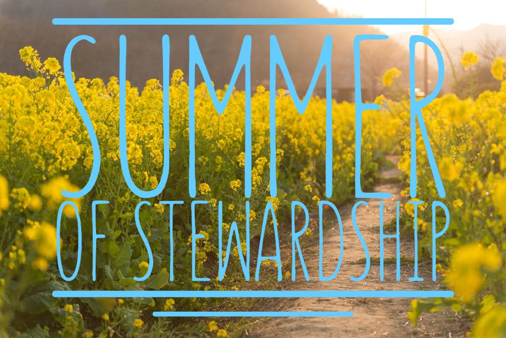 "Rape blossom field and text ""Summer of Stewardship"""