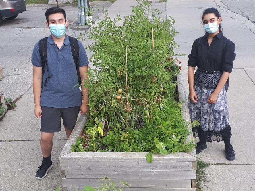 Your Community Garden On Our Superior Av Raised Beds – Take Some Fresh Vegetables